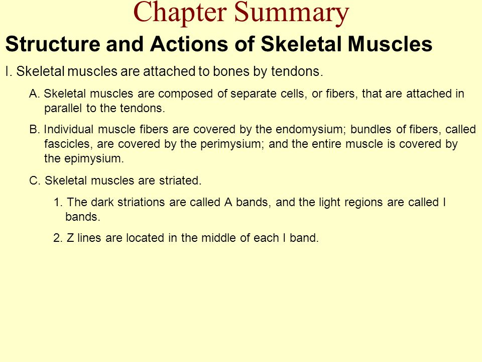 Chapter Summary Structure and Actions of Skeletal Muscles