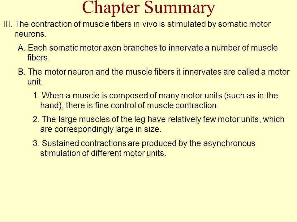 Chapter Summary III. The contraction of muscle fibers in vivo is stimulated by somatic motor neurons.