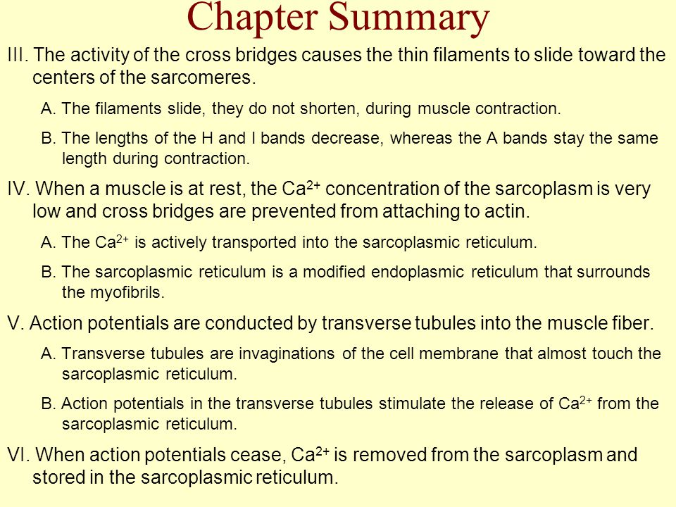 Chapter Summary III. The activity of the cross bridges causes the thin filaments to slide toward the centers of the sarcomeres.