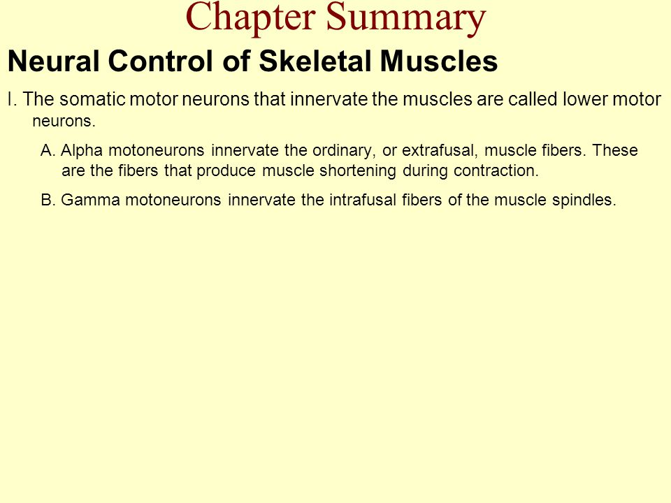 Chapter Summary Neural Control of Skeletal Muscles