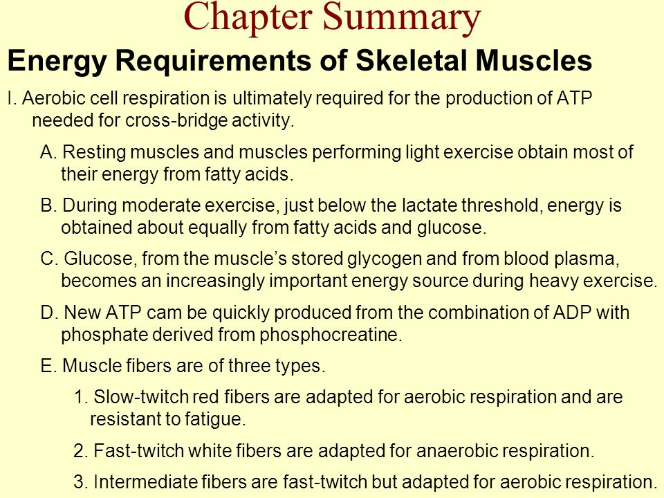 Chapter Summary Energy Requirements of Skeletal Muscles