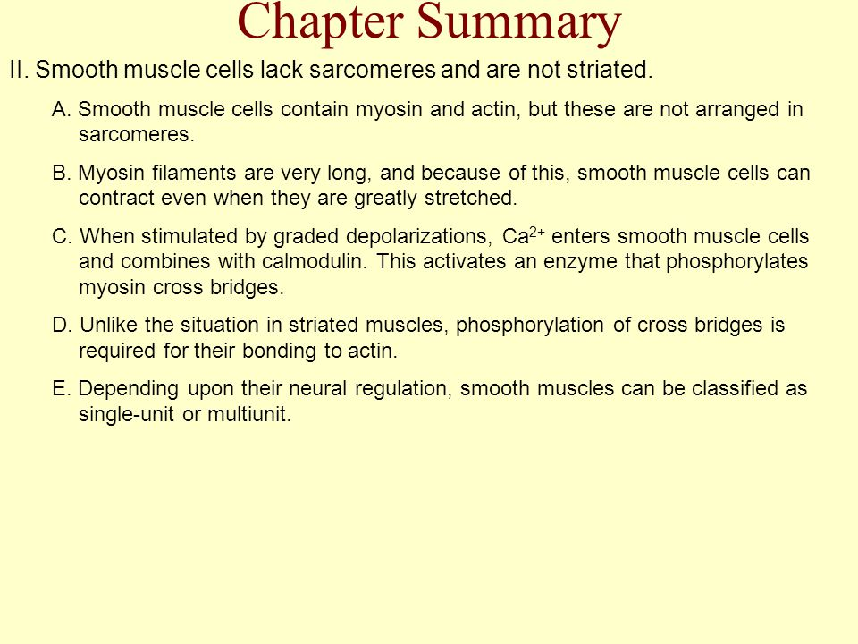 Chapter Summary II. Smooth muscle cells lack sarcomeres and are not striated.