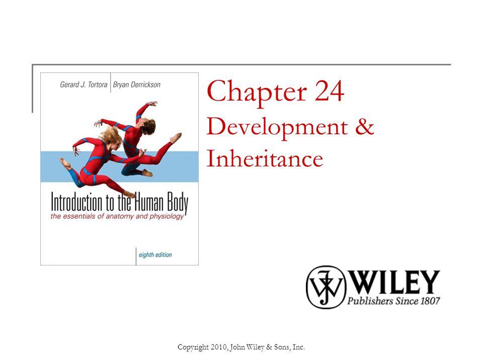 Chapter 24 Development & Inheritance