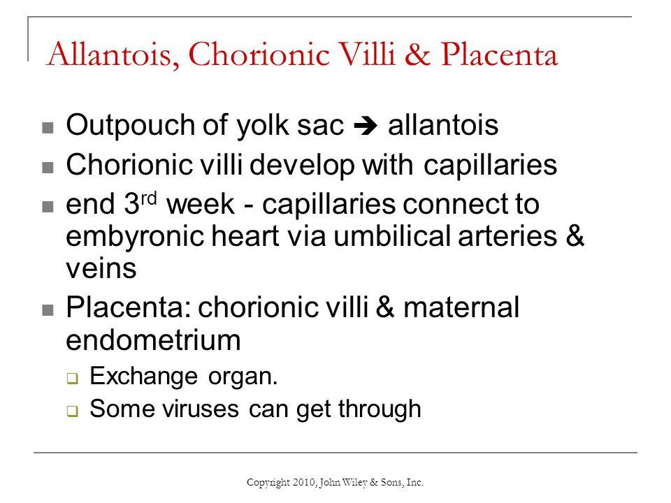 Allantois, Chorionic Villi & Placenta