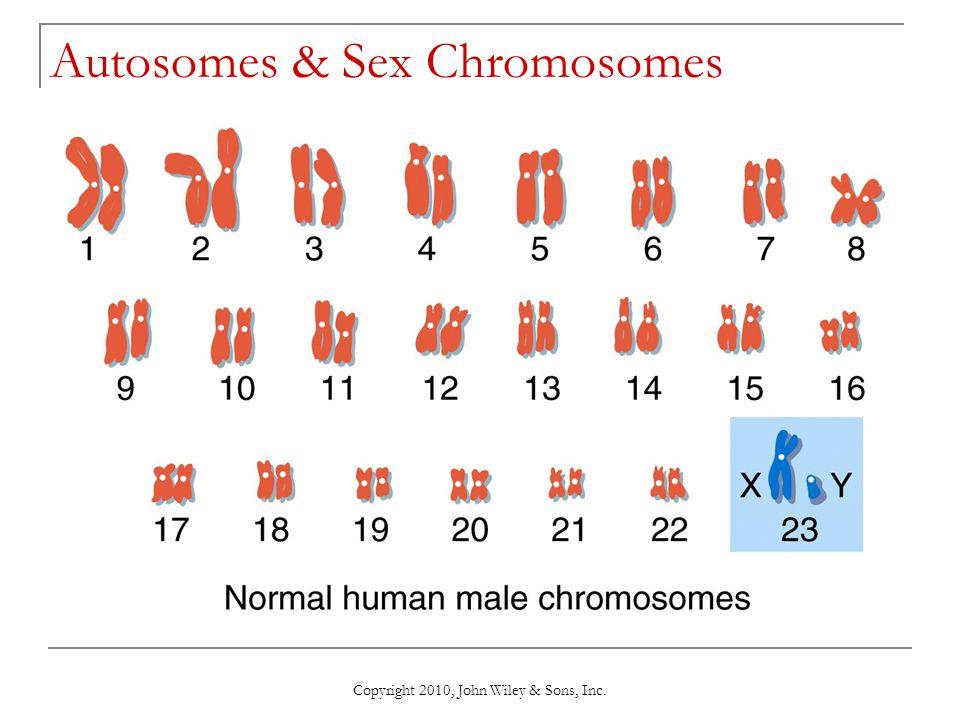 Autosomes & Sex Chromosomes