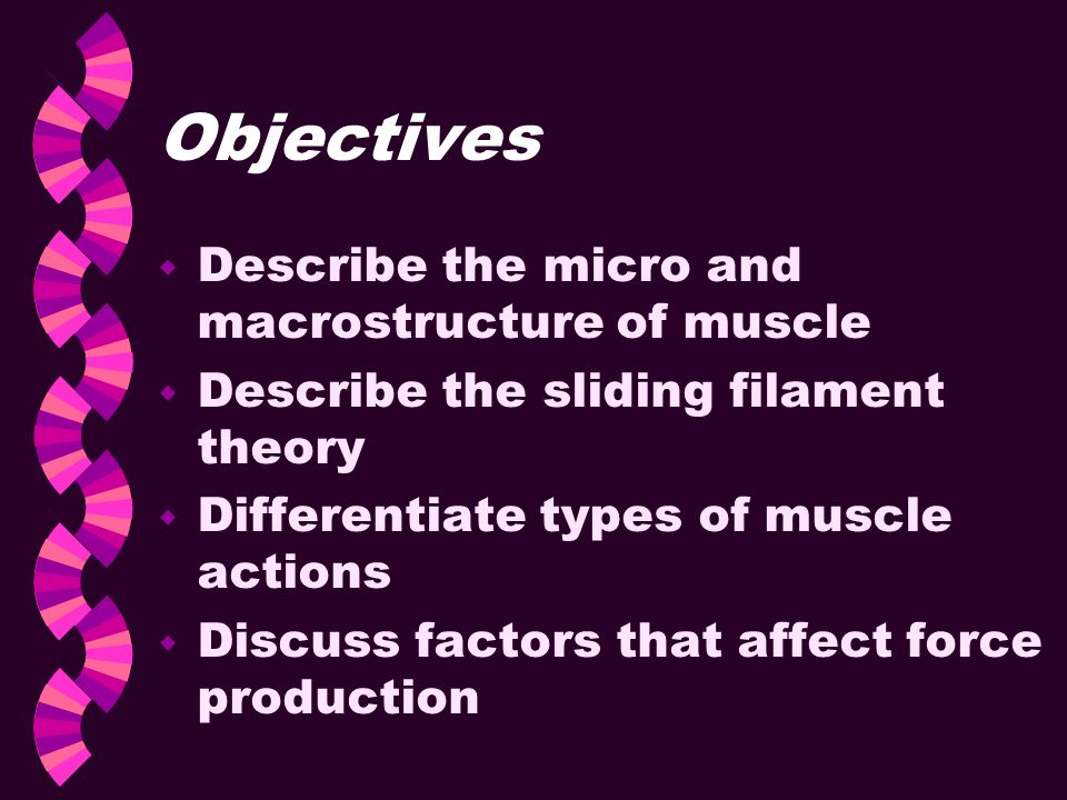 Objectives Describe the micro and macrostructure of muscle