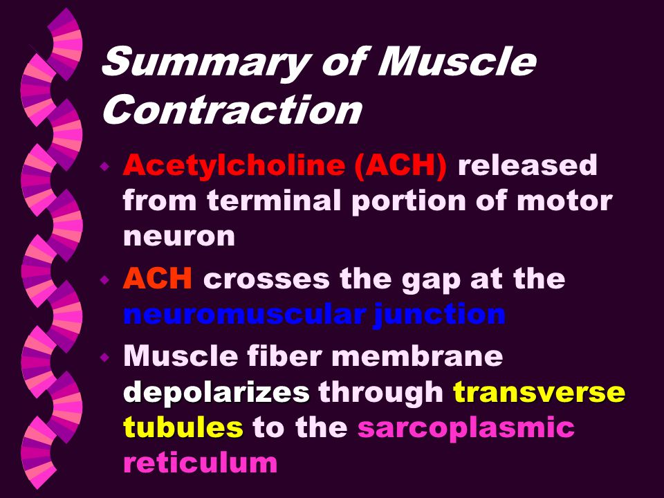 Summary of Muscle Contraction