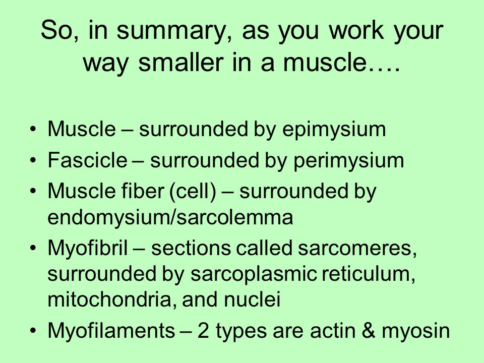 So, in summary, as you work your way smaller in a muscle….