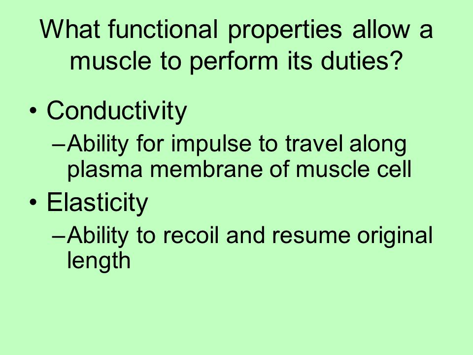 What functional properties allow a muscle to perform its duties
