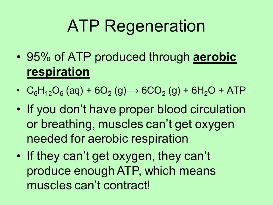 ATP Regeneration 95% of ATP produced through aerobic respiration