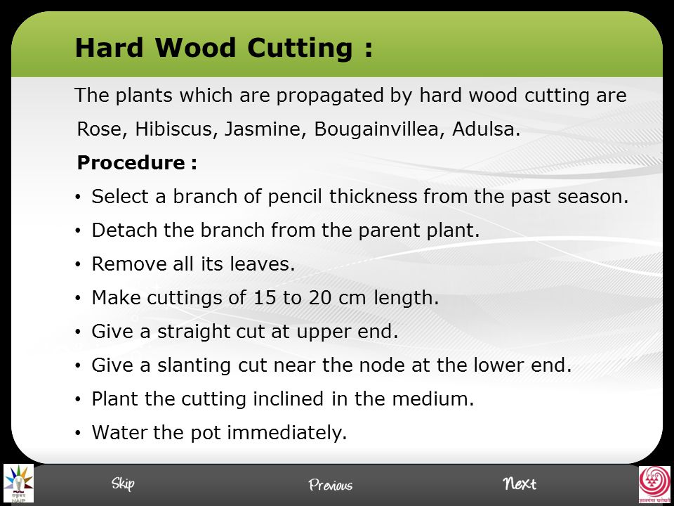 Hard Wood Cutting : The plants which are propagated by hard wood cutting are Rose, Hibiscus, Jasmine, Bougainvillea, Adulsa.