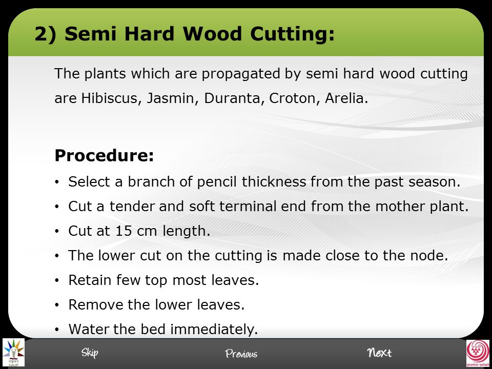 2) Semi Hard Wood Cutting:
