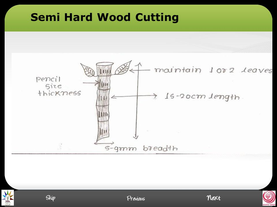 Semi Hard Wood Cutting