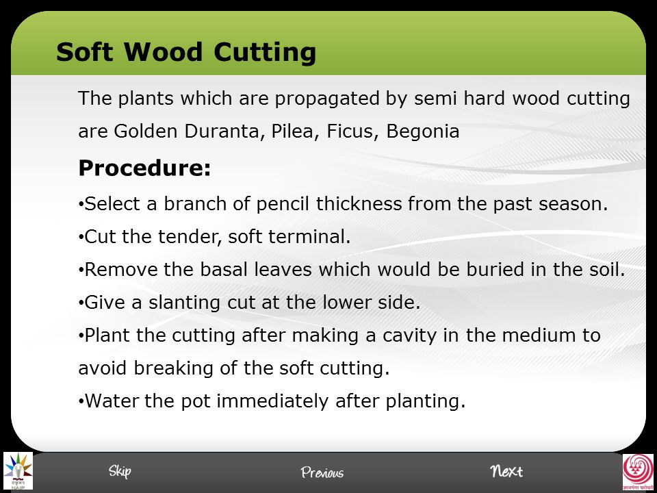 Soft Wood Cutting Procedure: