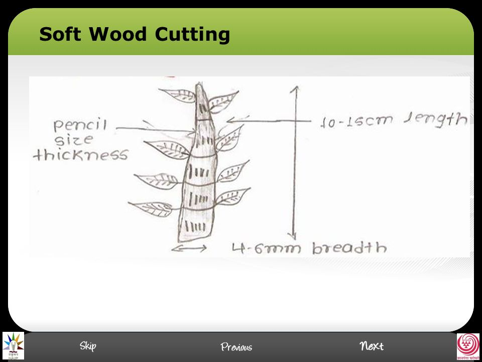 Soft Wood Cutting
