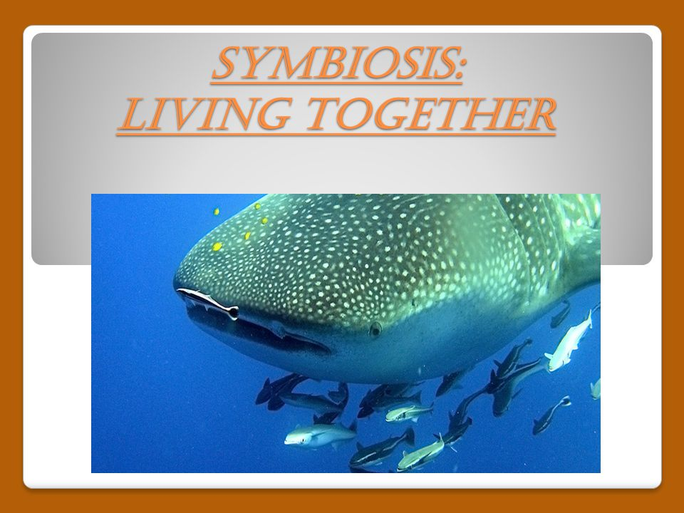 Symbiosis: Living Together