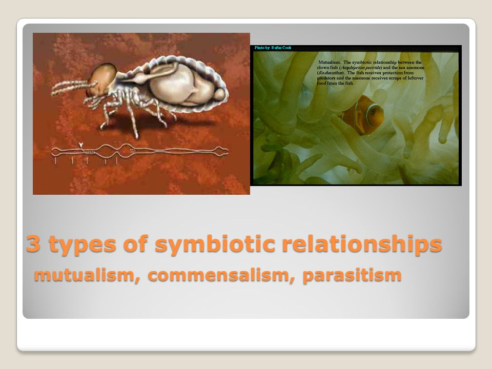 3 types of symbiotic relationships mutualism, commensalism, parasitism