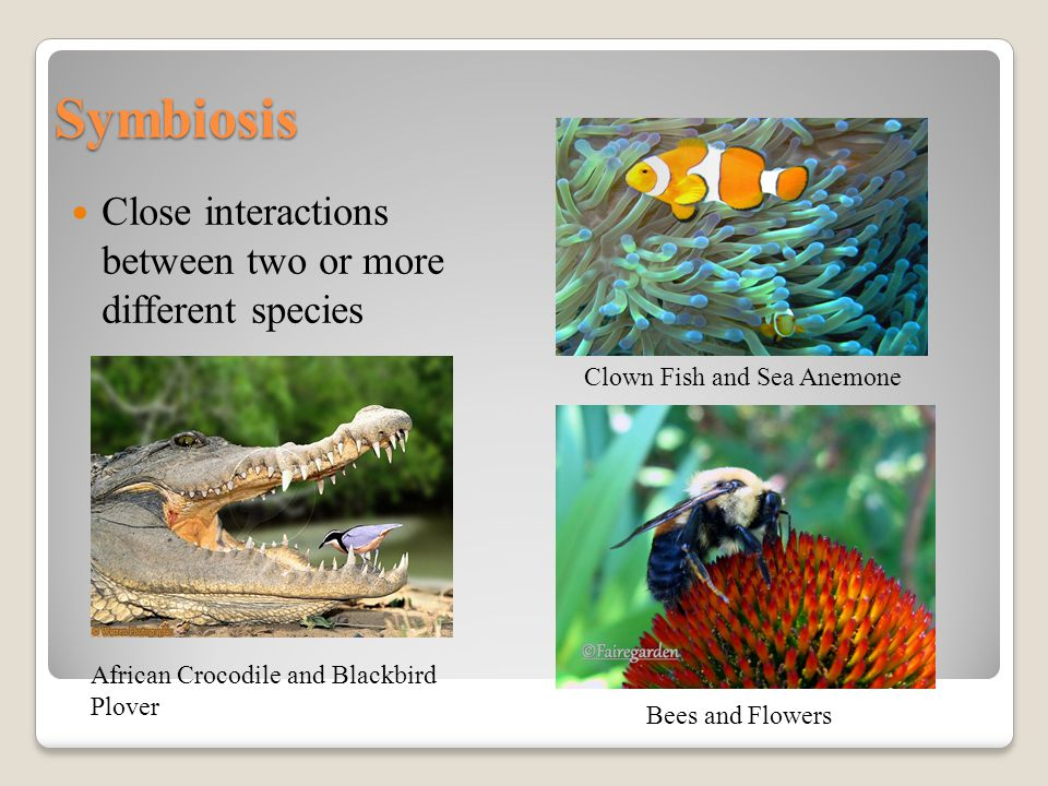 Symbiosis Close interactions between two or more different species