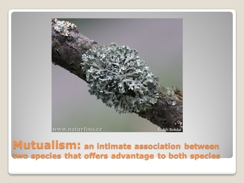 Mutualism: an intimate association between two species that offers advantage to both species