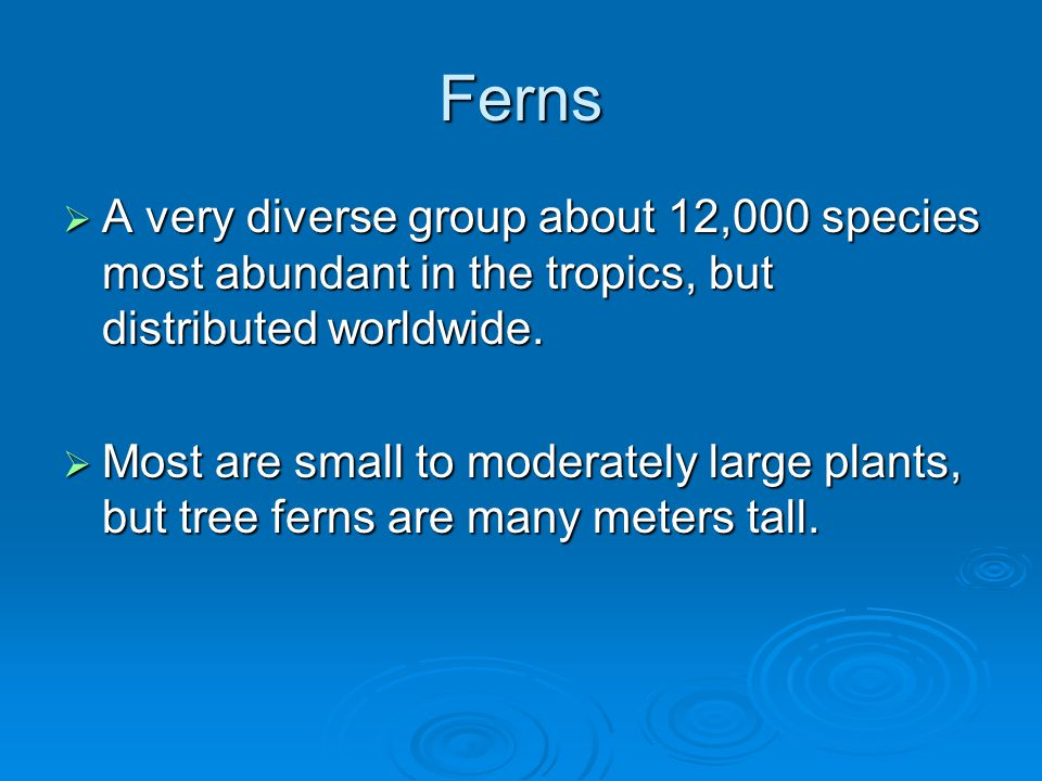 Ferns A very diverse group about 12,000 species most abundant in the tropics, but distributed worldwide.