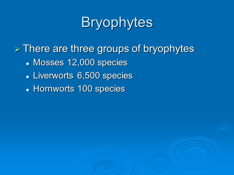 Bryophytes There are three groups of bryophytes Mosses 12,000 species