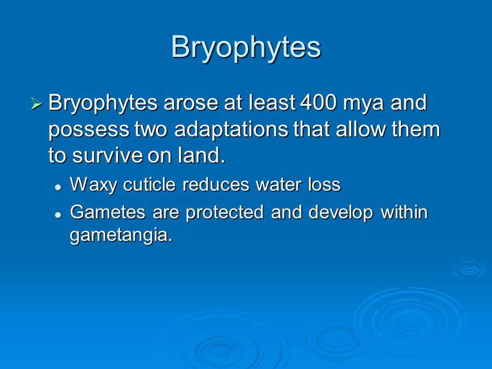 Bryophytes Bryophytes arose at least 400 mya and possess two adaptations that allow them to survive on land.