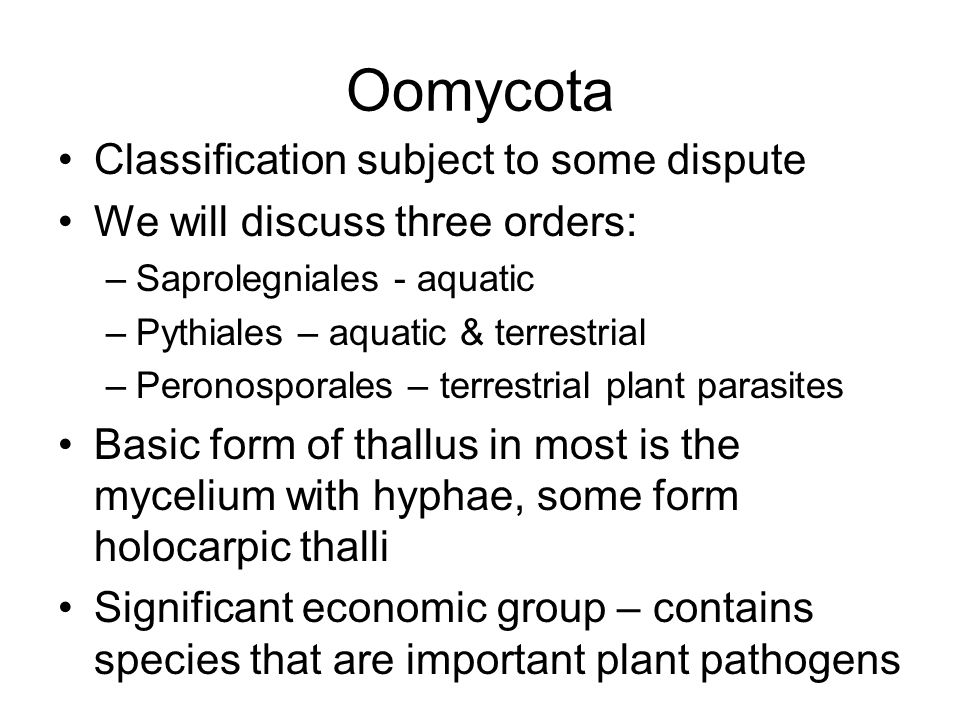 Oomycota Classification subject to some dispute