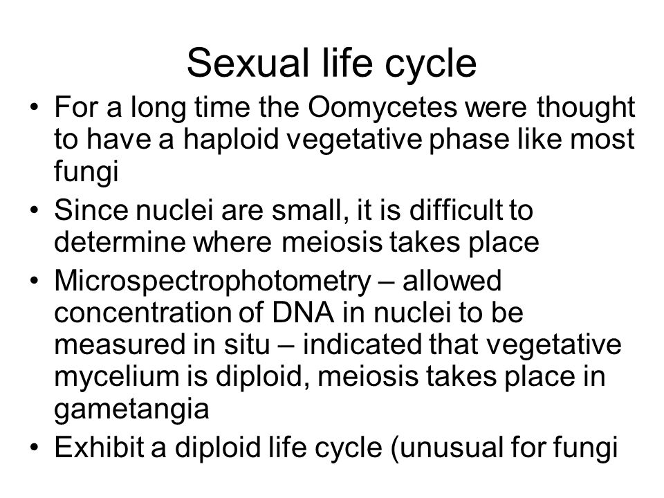 Sexual life cycle For a long time the Oomycetes were thought to have a haploid vegetative phase like most fungi.