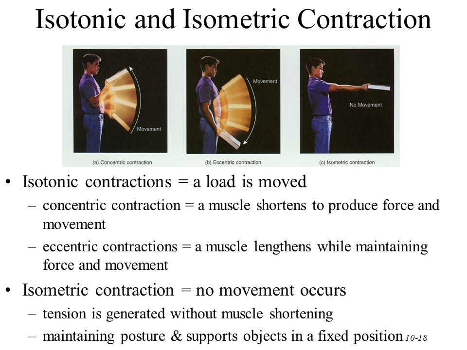 Isotonic and Isometric Contraction