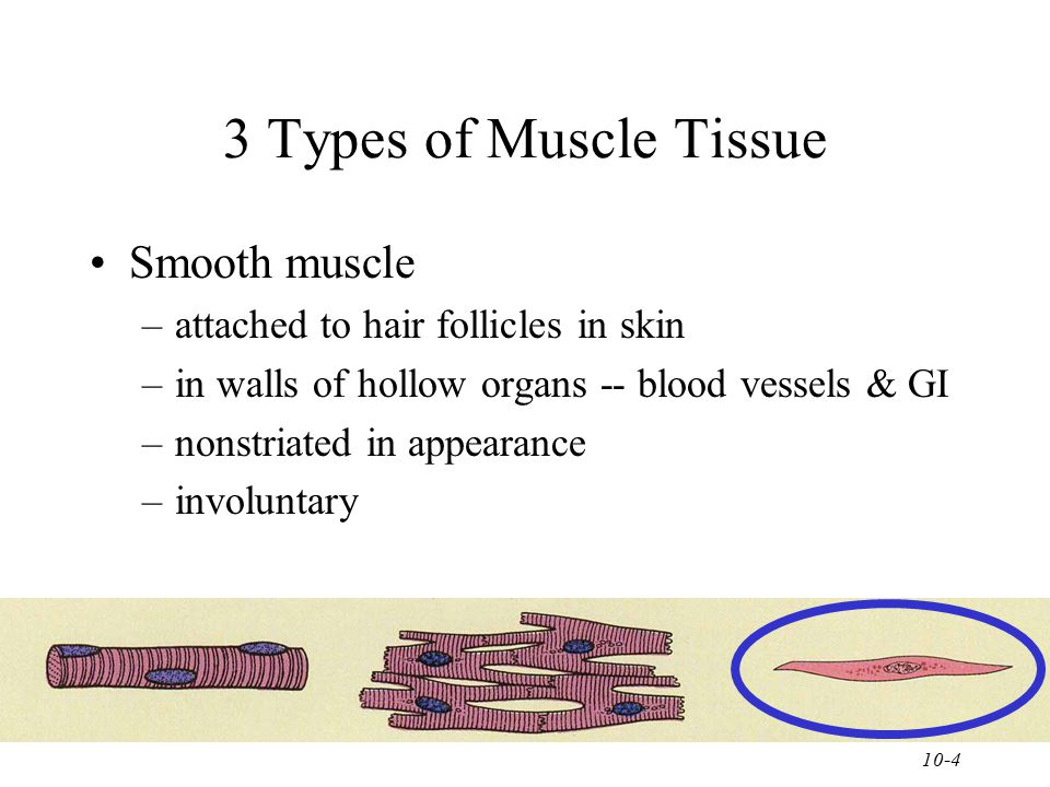 3 Types of Muscle Tissue Smooth muscle