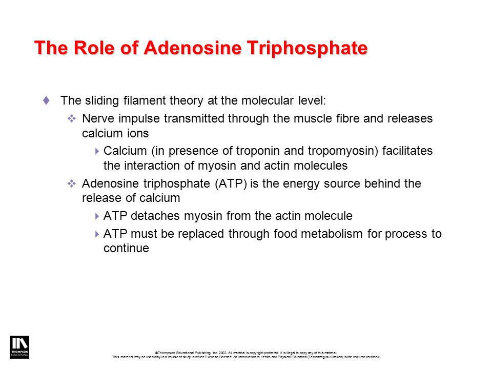 The Role of Adenosine Triphosphate