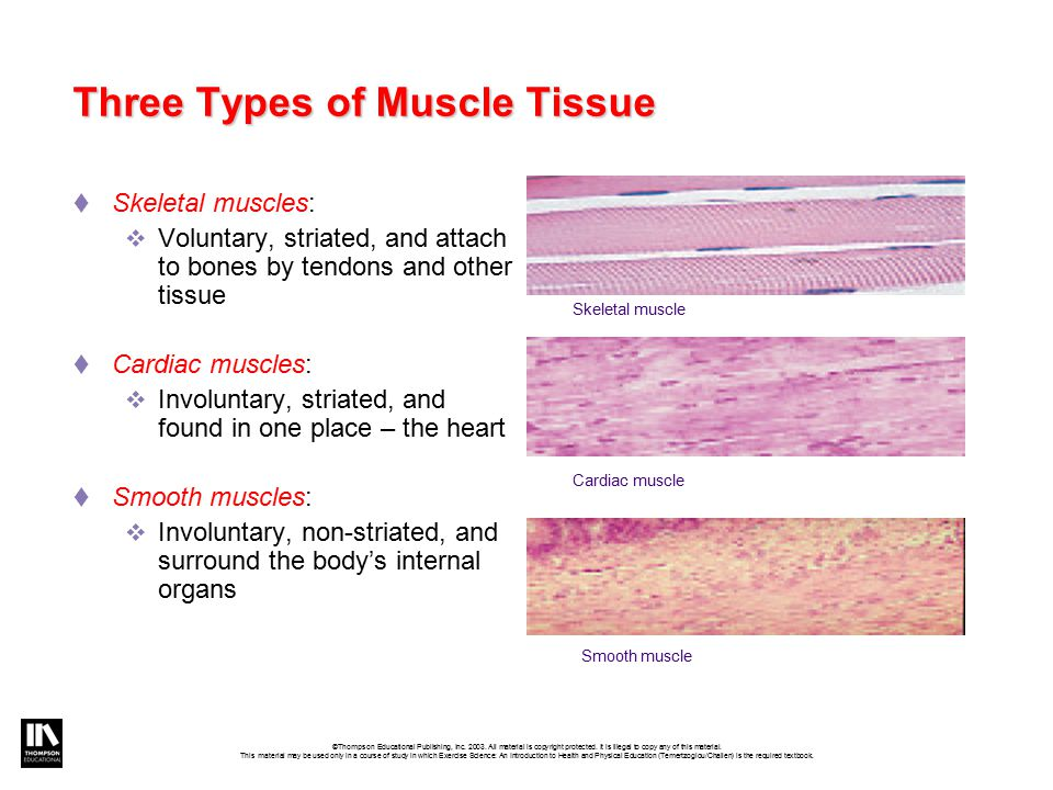 What Are the Three Types of Muscle Tissue?