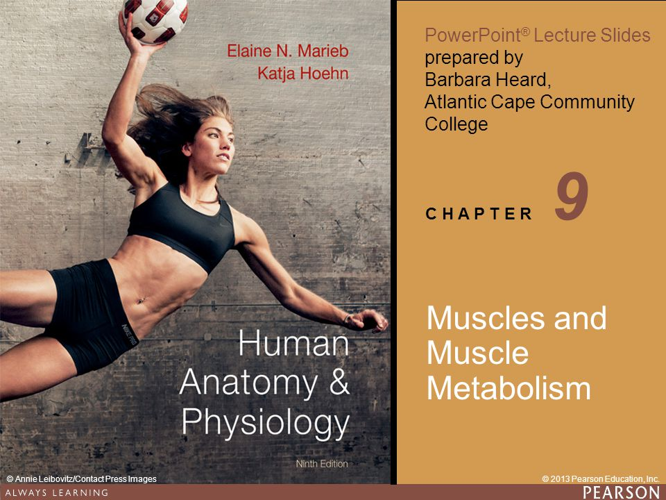 9 Muscles and Muscle Metabolism