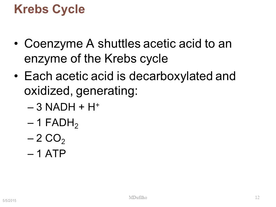 Coenzyme A shuttles acetic acid to an enzyme of the Krebs cycle