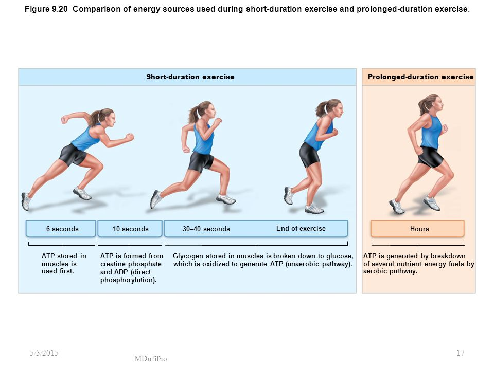 Figure 9.20 Comparison of energy sources used during short-duration exercise and prolonged-duration exercise.