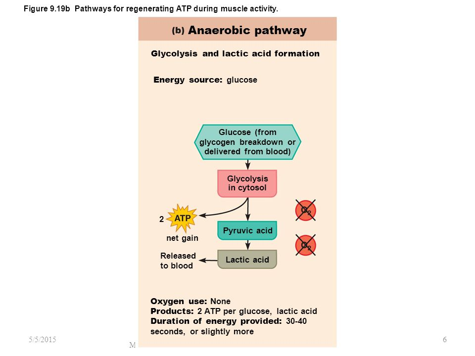 Anaerobic pathway Glycolysis and lactic acid formation