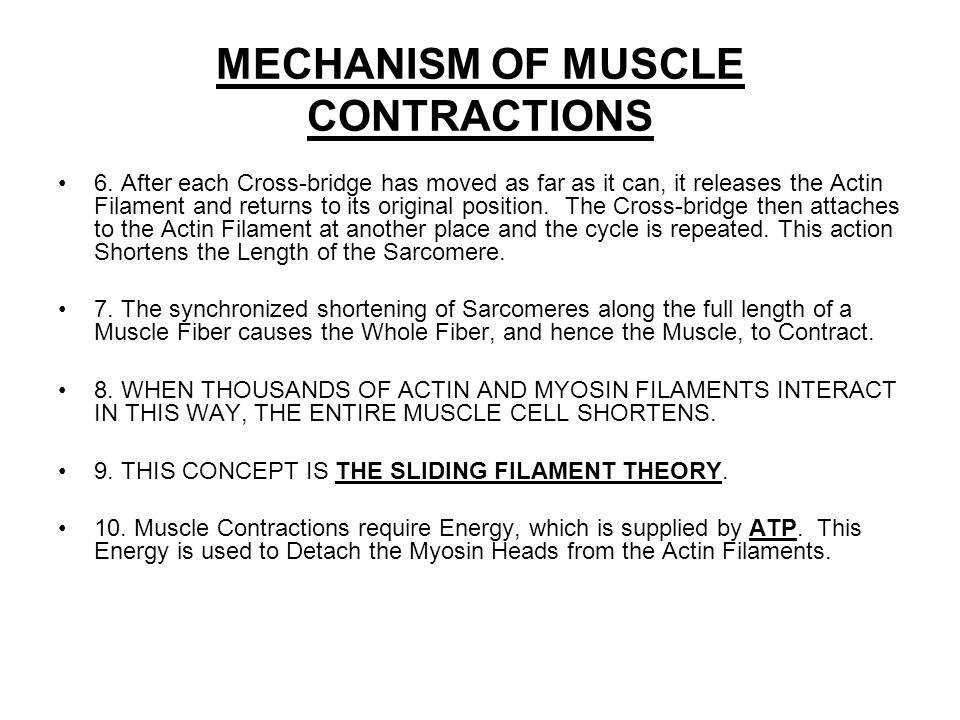 MECHANISM OF MUSCLE CONTRACTIONS