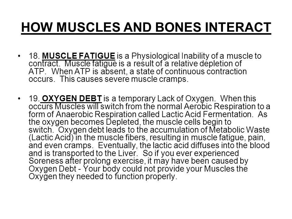 HOW MUSCLES AND BONES INTERACT