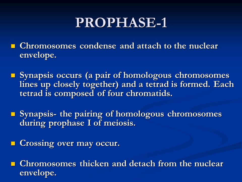PROPHASE-1 Chromosomes condense and attach to the nuclear envelope.