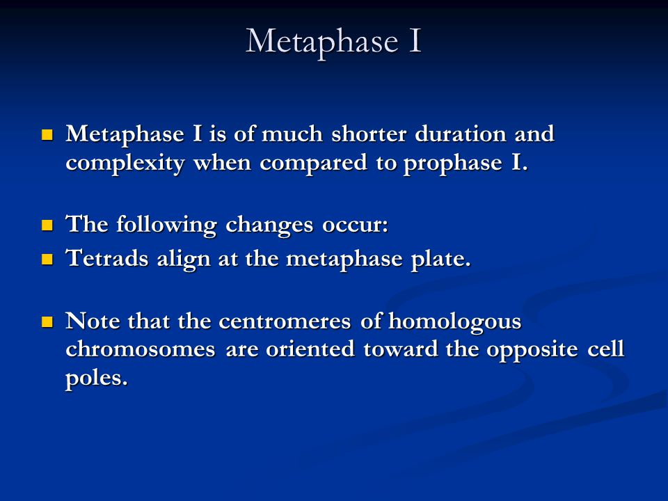 Metaphase I Metaphase I is of much shorter duration and complexity when compared to prophase I. The following changes occur: