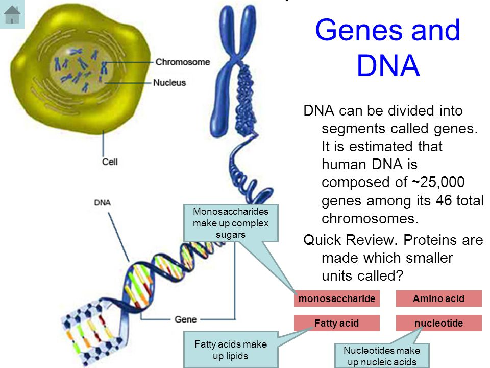 relationship among genes dna and proteins