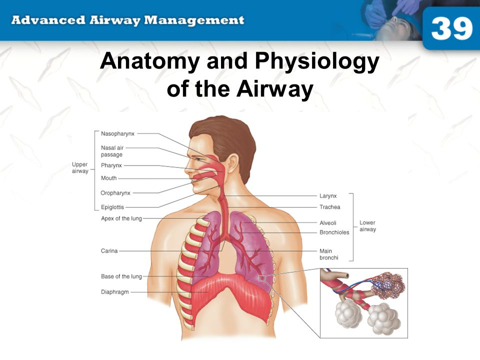 Anatomy and Physiology of the Airway