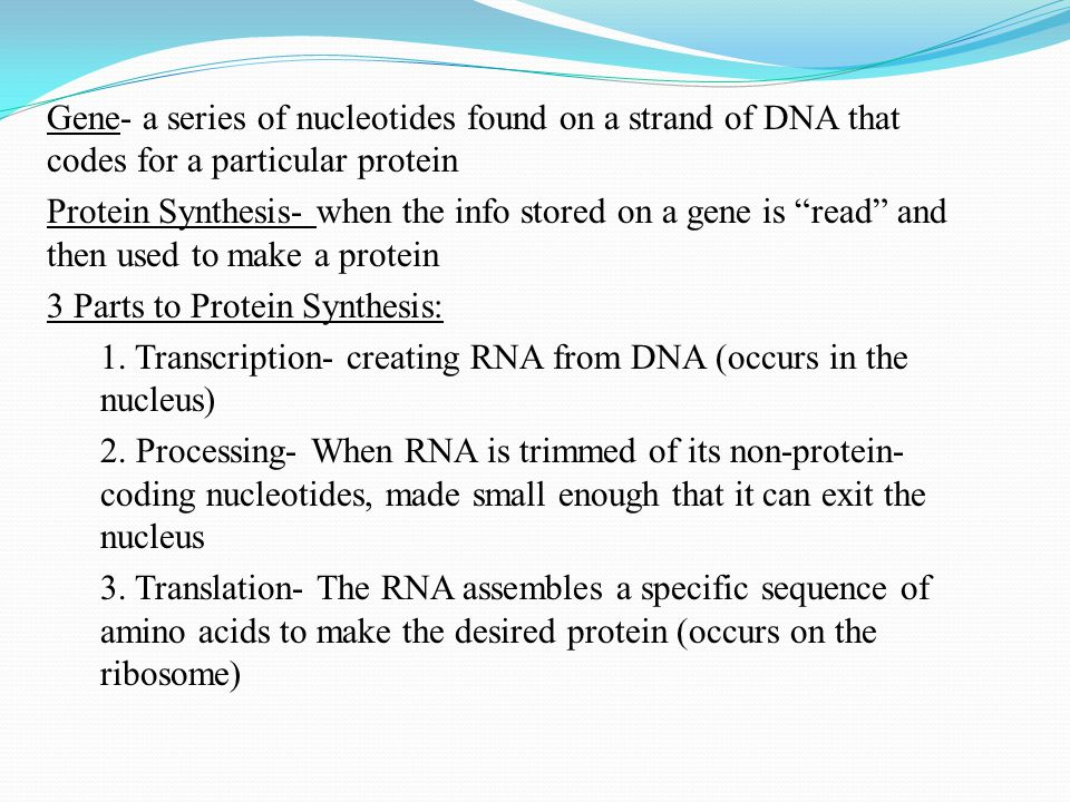 Gene- a series of nucleotides found on a strand of DNA that codes for a particular protein