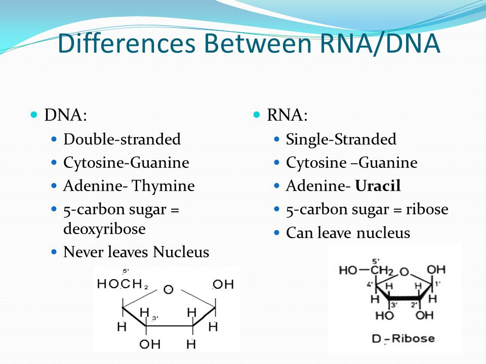Differences Between RNA/DNA