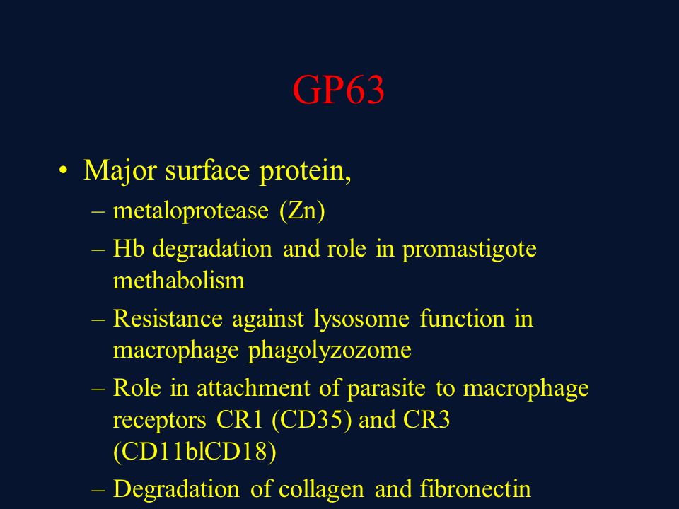GP63 Major surface protein, metaloprotease (Zn)