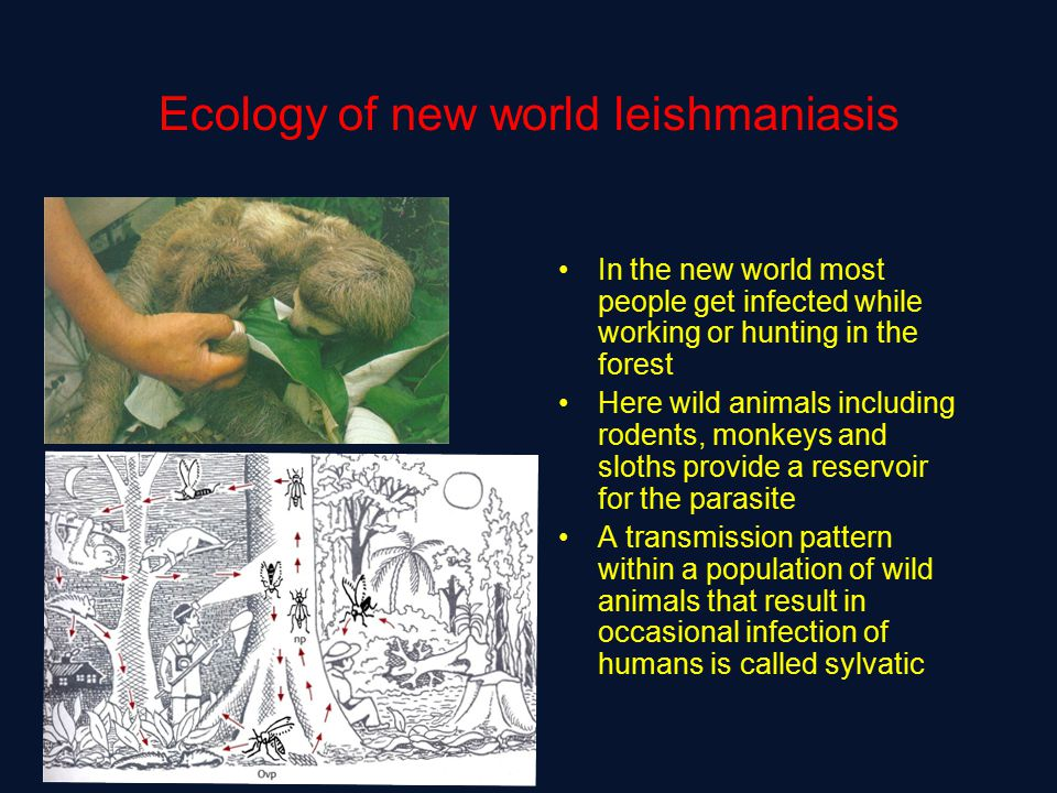 Ecology of new world leishmaniasis