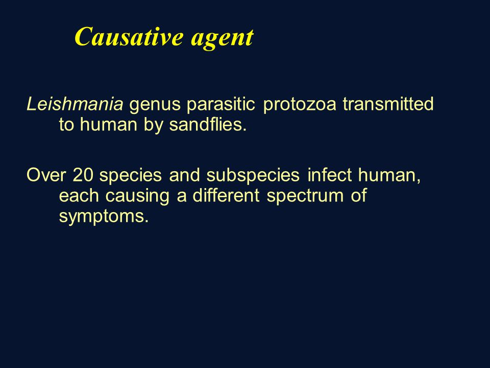 Causative agent Leishmania genus parasitic protozoa transmitted to human by sandflies.