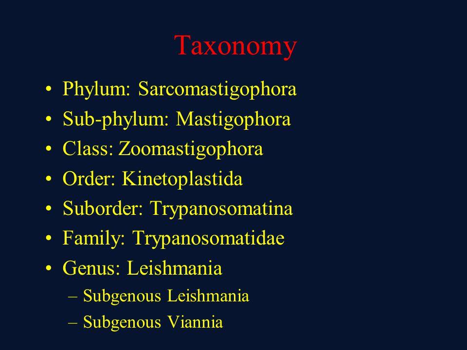 Taxonomy Phylum: Sarcomastigophora Sub-phylum: Mastigophora