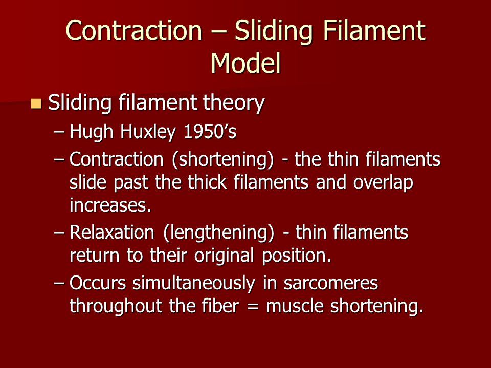 Contraction – Sliding Filament Model
