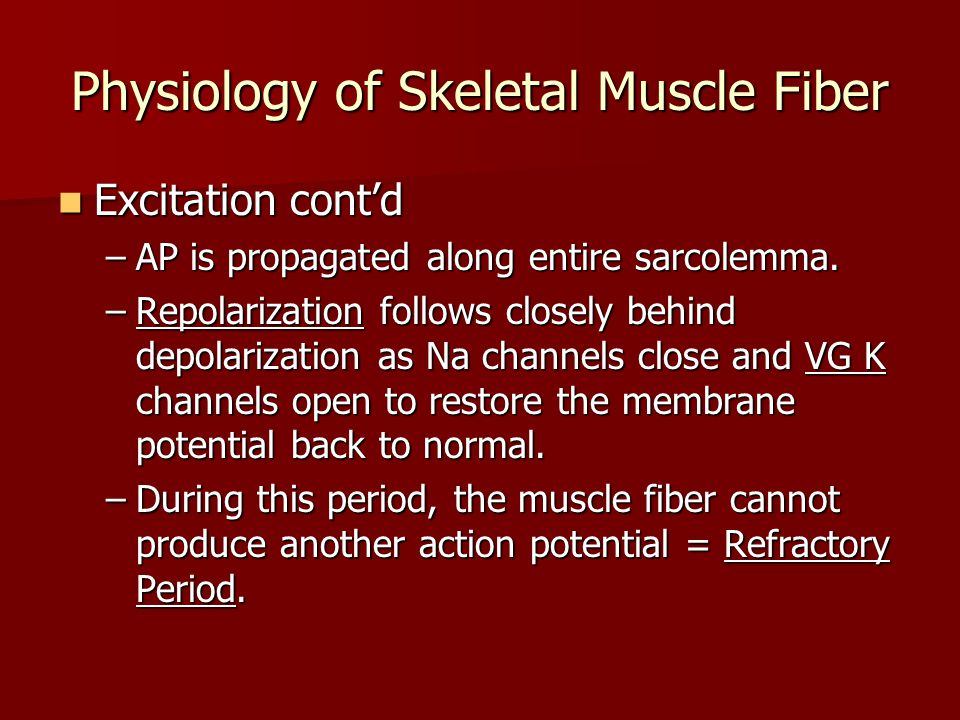 Physiology of Skeletal Muscle Fiber